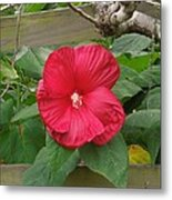 A Red Hibiscus Metal Print