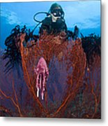 A Red Sea Fan With Sponge Colored Clam Metal Print