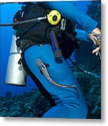A Remora Attached To A Diver, Kimbe Metal Print