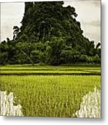 A Rice Field In Asia Metal Print by Nathan Lau