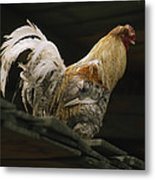 A Rooster Struts On A Wood Roof Metal Print