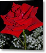 A Rose For Suzanne Metal Print