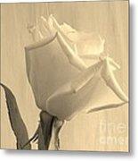 A Rose In Sepia Tone Metal Print