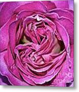 A Rose Is A Rose ... Metal Print