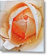 A Roses Tear Metal Print