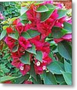 A Section Of Pink Bougainvillea Flowers Metal Print