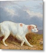 A Setter On The Moor Metal Print by Philip Reinagle