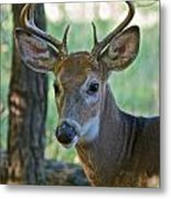 A Seven Point Profile 9752 Metal Print