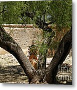 A Shady Rest Metal Print