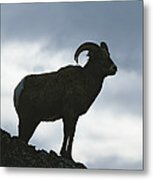 A Silhouetted Bighorn Sheep Standing Metal Print