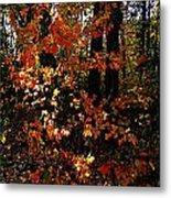A Slash Of Sunlight Metal Print by Julie Dant