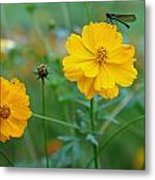 A Small Dragon Fly Sitting On A Yellow Flower Metal Print