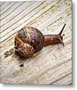 A Snail Sliding Across A Wooden Surface Metal Print by Tom Gowanlock