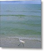 A Snowy Egret Walks Along The Beach Metal Print