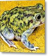 A Spadefoot Toad Metal Print