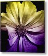 A Special Daisy II Metal Print