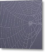 A Spider's Handiwork Metal Print