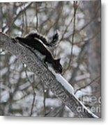 A Squirrel Snow Cone Metal Print
