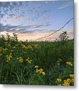 A Summer Evening Sky With Yellow Tansy Metal Print