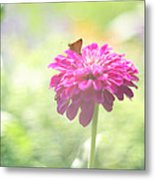 A Summer's Song Metal Print by Amy Tyler