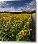 A Sunny Sunflower Day Metal Print