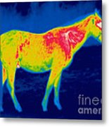 A Thermogram Of A Horse Metal Print