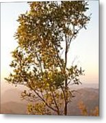 A Tree Outlined By The Rays Of The Setting Sun At Pachmarhi Metal Print