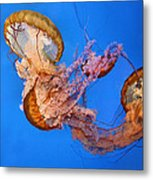 A Trio Of Jellyfish Metal Print