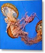 A Trio Of Jellyfish Metal Print by Kristin Elmquist