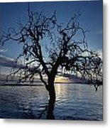 A View At Dawn Of A Silhouetted Tree Metal Print