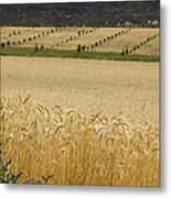 A View Of A Summer Field Of Wheat Metal Print