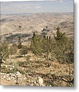 A View Of Olive Trees And Moses Metal Print