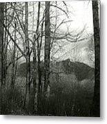 A View Through The Trees Bw Metal Print