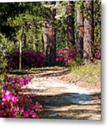 A Walk In The Springtime Woods Metal Print
