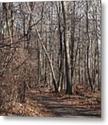 A Walk In The Woods Metal Print by Robert Margetts
