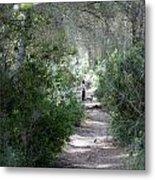 a walk about fairy wood - Mediterranean autumn forest Metal Print