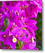 A Wall Of Flowers Metal Print