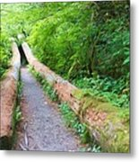 A Well Marked Path Metal Print