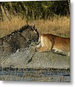 A Wildebeest And A Red Lechwe Leap Metal Print