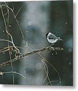 A Willow Tit Parus Montanus Perches Metal Print