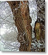 A Winter's Afternoon. Metal Print