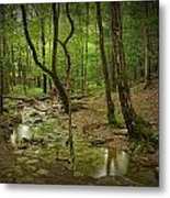 A Woodland Stream In Cades Cove No.472 Metal Print