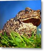 A Worm's Eye View Metal Print