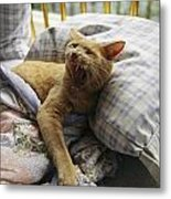 A Yawning Cat Wakes From A Nap Metal Print