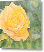A Yellow Rose Metal Print