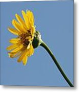 A Yellow Wildflower Metal Print