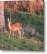 Aah Baby - Deer Metal Print