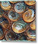 Abalones Metal Print by Judi Bagwell