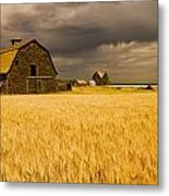 Abandoned Farm, Wind-blown Durum Wheat Metal Print