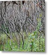 Abandoned Orchid Metal Print